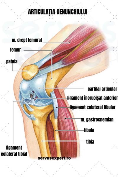 deteriorarea tendoanelor și ligamentelor simptomelor articulației genunchiului