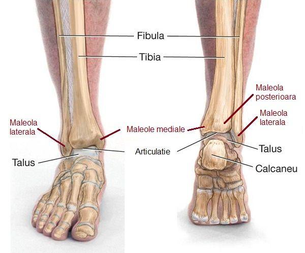 dislocarea timpului de recuperare a articulației gleznei)