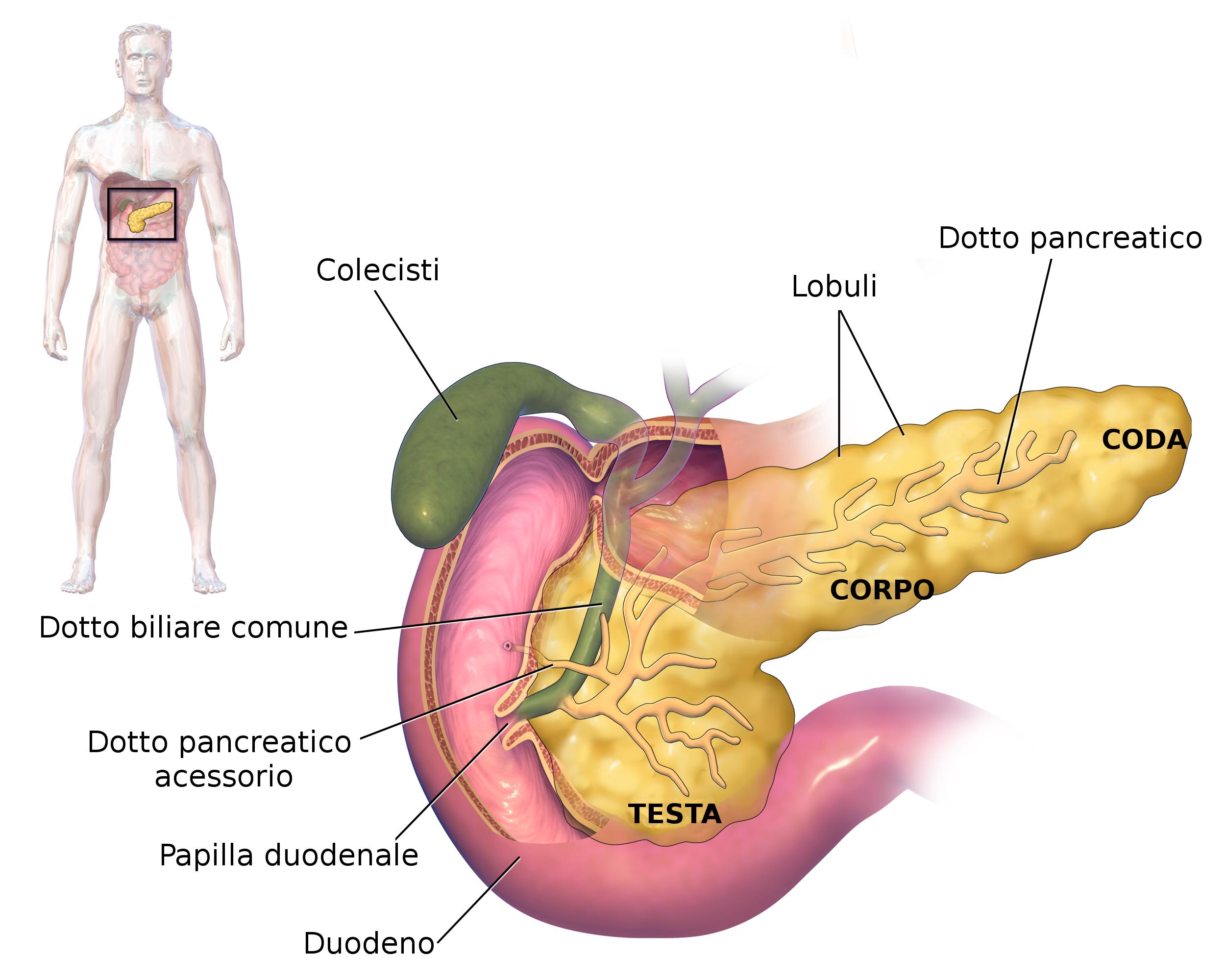 Durerea de pancreas