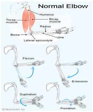 dureri musculare la nivelul antebrațului și articulației cotului