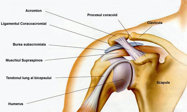 durerile și crăpăturile articulațiilor umărului