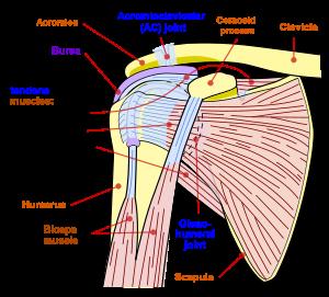 articulația umărului și umflarea