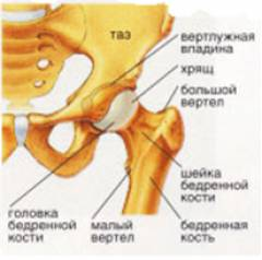 semne inițiale de artroză a articulației șoldului)