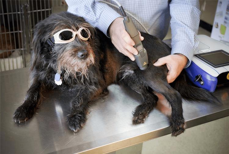 terapie cu laser articulară