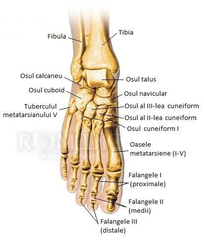 tratamentul articulației metatarsofangianului piciorului