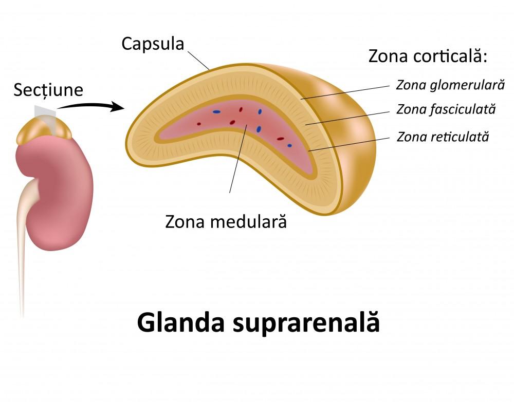 dureri ale glandelor suprarenale