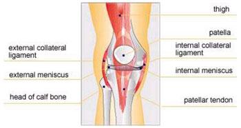 Deteriorarea ligamentului colateral al genunchiului - Parteneri: