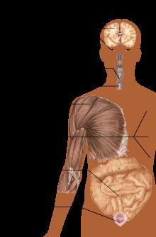 ce este tratamentul sclerozei articulare)
