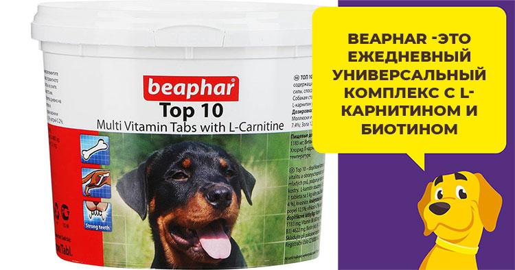 păr de câine pentru dureri articulare)