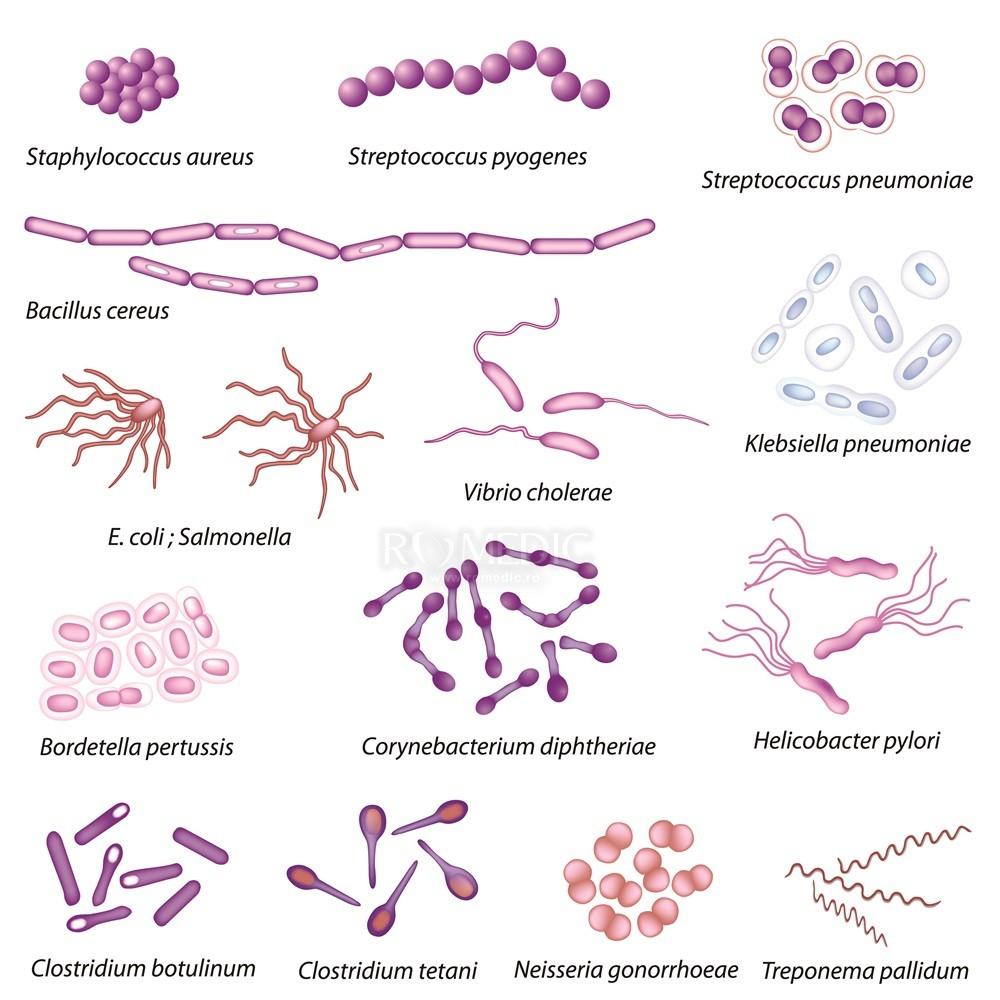 tratamentul infecției streptococice la nivelul articulațiilor