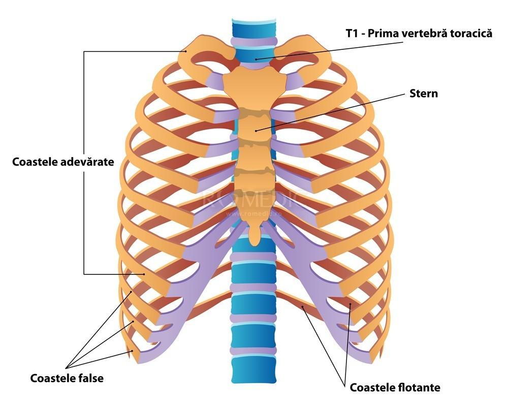 durere în articulațiile sternului