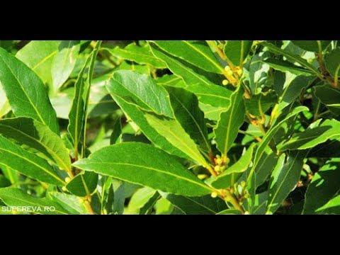 plante medicinale pentru tratamentul artrozei deformante)