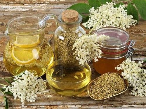boli de plante medicinale pe bază de plante