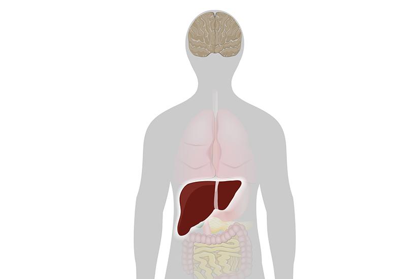 Primele semne ale unui ficat cu probleme