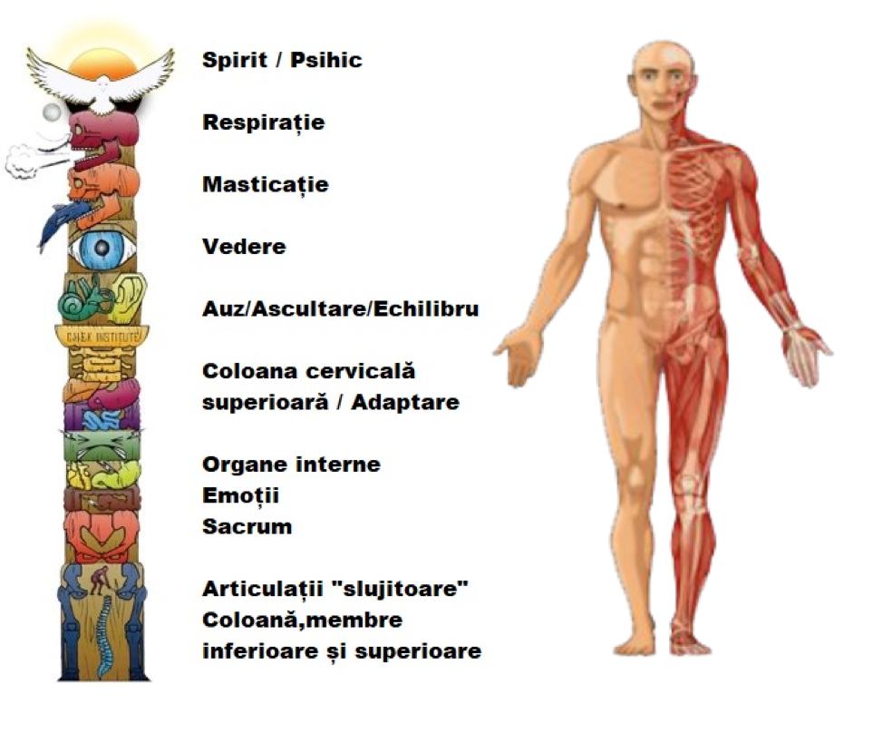 Reumatism: Ce este, Care sunt Simptomele & Tratament - Respirația exercită dureri articulare