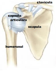 durere în articulația umărului cu un suspin unguent articular hash minune