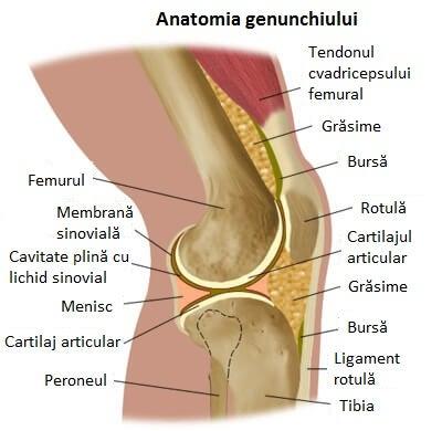 din cauza căreia articulația genunchiului poate să doară)
