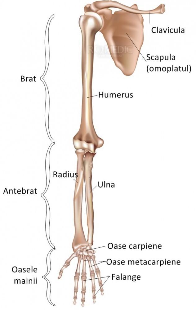 boli ale oaselor și articulațiilor membrelor