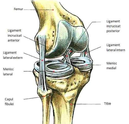 ruperea ligamentelor timpului de recuperare a articulației genunchiului