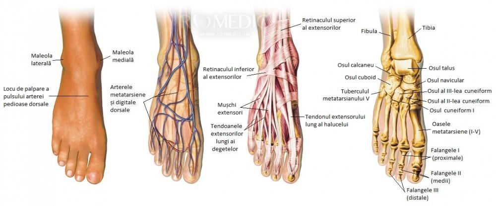 Boala articulației piciorului feminin