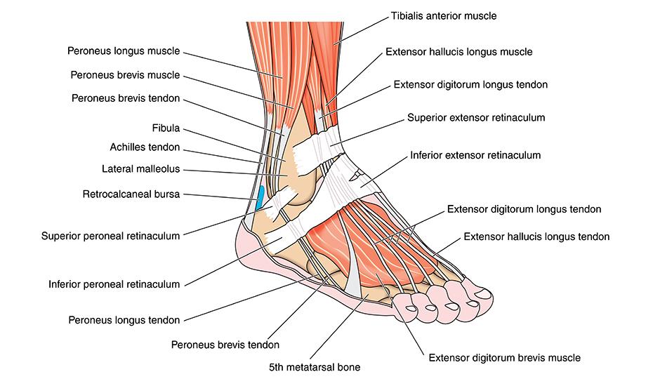 refacerea articulației gleznei după ruperea ligamentelor)