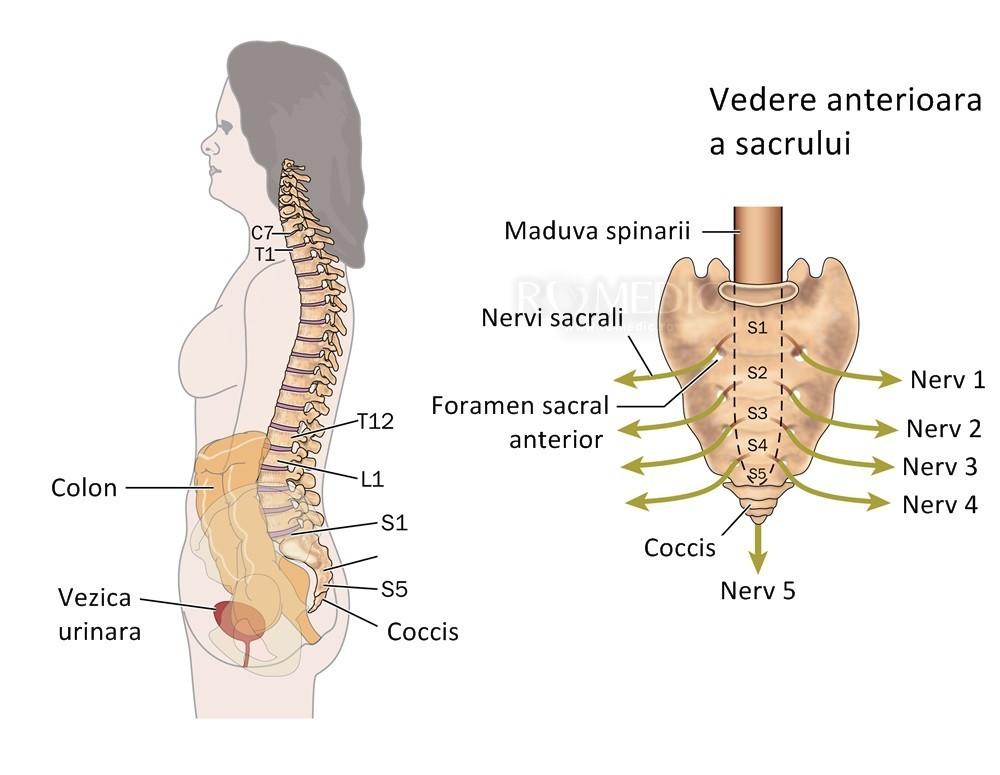 durere la nivelul coloanei vertebrale în articulațiile coastelor)