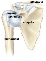 durere în braț în jurul articulației umărului)