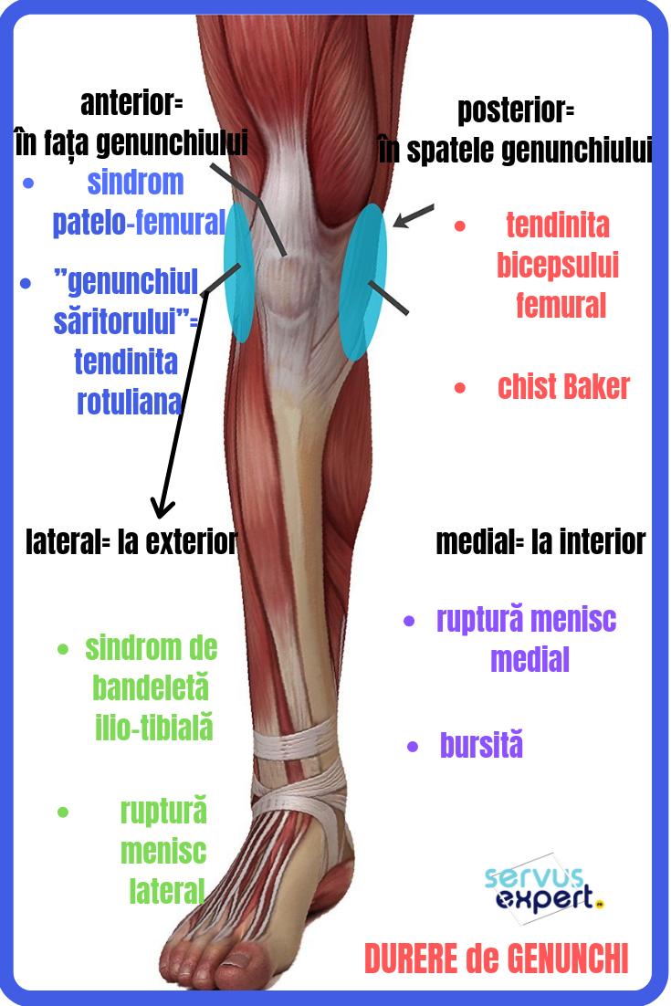 dureros în spatele genunchiului)