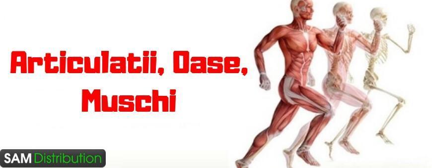 dureri de articulații și mușchi