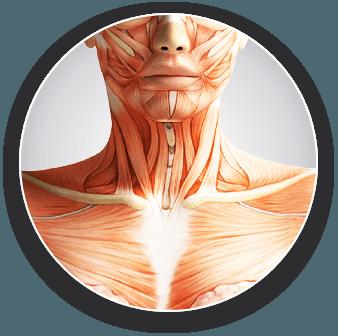 ce boli afectează articulațiile și mușchii?)