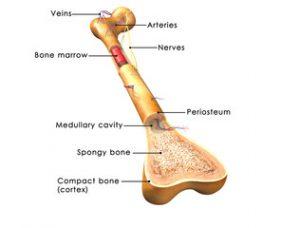 ciupire aduce durere la articulația șoldului vis pentru tratamentul artrozei